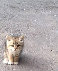 бетонный пол кот
