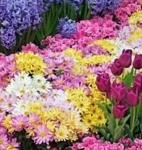 Многолетние цветы – лучший вариант для клумбы