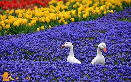 Многолетние-цветы-для-клумбы
